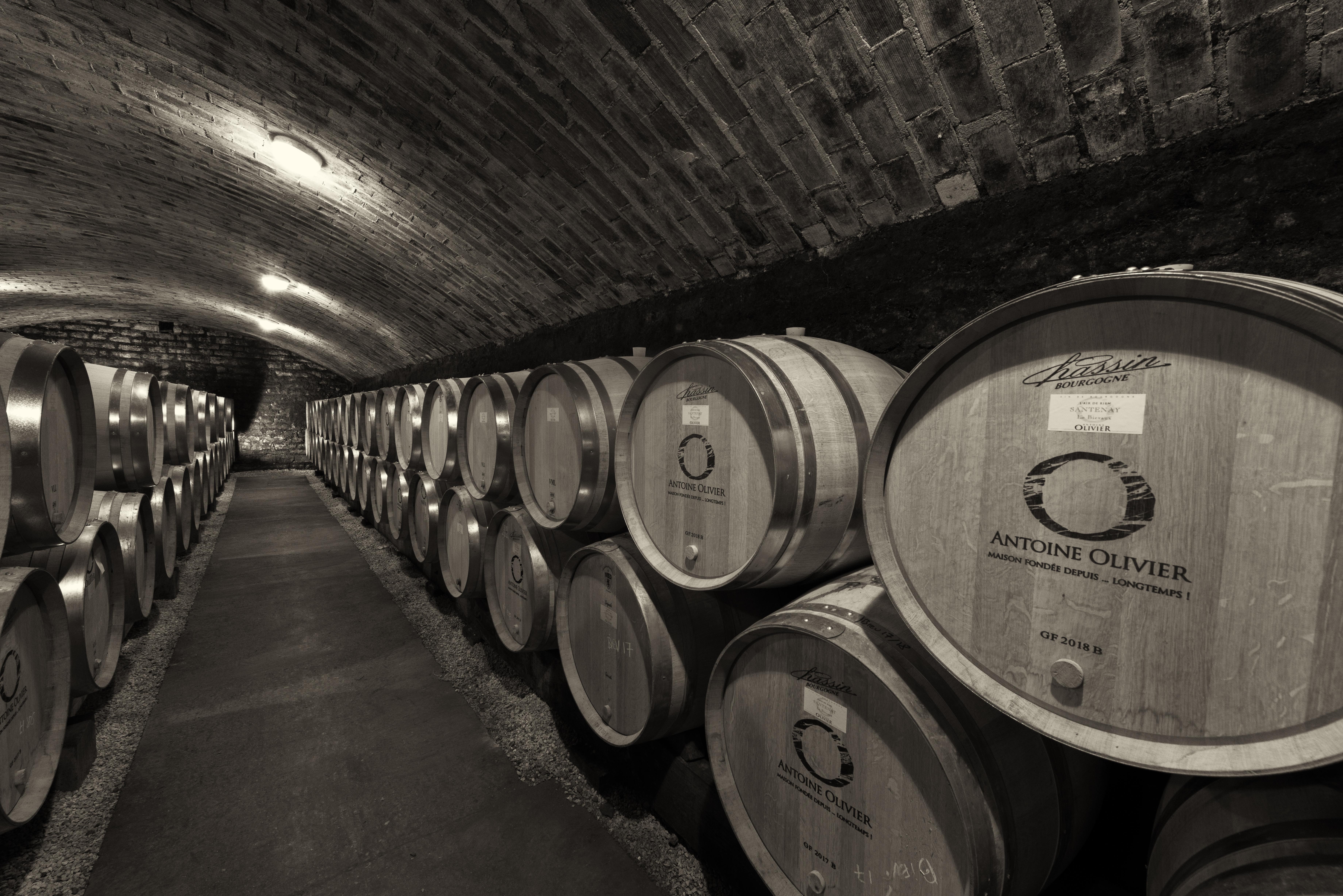 Antoine Olivier, vins de Santenay