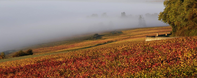 Vignes dans le brouillard