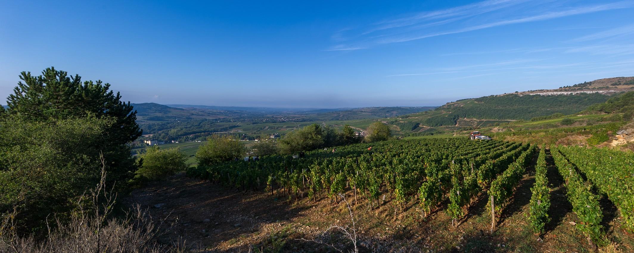 Vignes et Tracteur