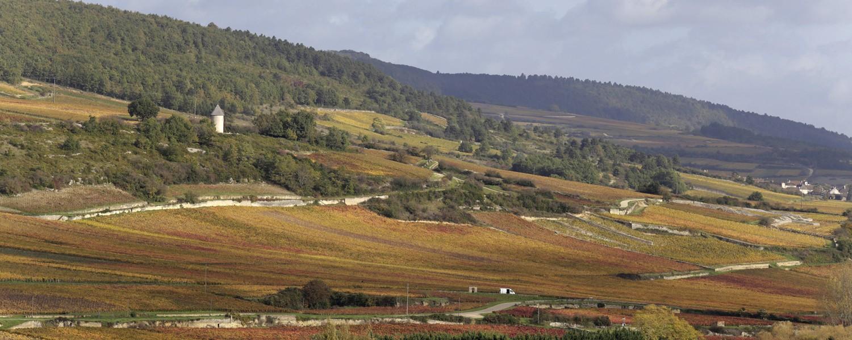 Flanc de colline